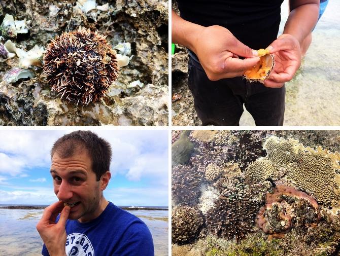 sea stuff (670x505)