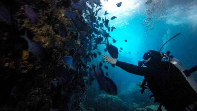 Diving Poor Knights Islands