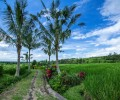 Experiencing Bali Culture