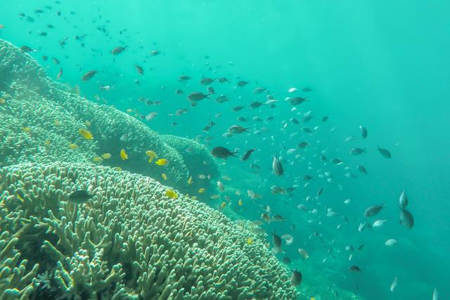 Snorkeling Menjangan Island